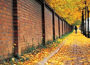 Stome wall by the sidewalk in autumn (thumbnail)