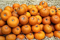 pile of pumpkin