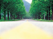 tree_lined street
