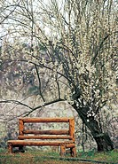 bench by the tree