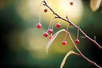 Fruits hung on the boughs (thumbnail)