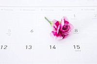 still life, carnation on calender