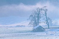 Barn and trees in a snow covered field, Saanich Peninsula, Victoria, British Columbia, Canada