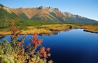 Autumn colours in Dolina Bielej Vody, High Tatras, Slovakia