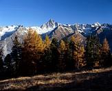 Herbstwald mit Sicht auf das Bietschhorn VS