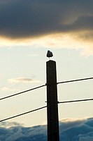 Bird resting on an electric pole, Santa Pola, Alicante, Spain