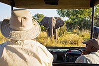A tourist watching an african elephant right in front of the car in Botswana, Africa