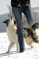 Woman playing with Australian Shepherd in the snow