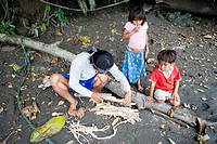 Preparing the barbasco root to go fishing, Amazon, Ecuador, South America