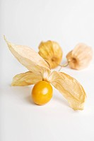 Cape gooseberry Physalis peruviana (thumbnail)