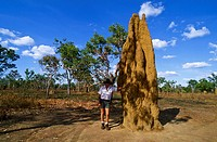 North _ Kakadu National Park _ Termite nest