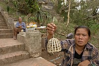 birds, people, selling, laos, person, woman