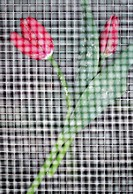 mesh, red, wire, between, tulips, two