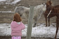 scenic, girl, horses, feed, trying, young