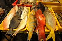 The fishes on the fishing marketplace in Malaysia