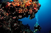 Diving at Coral Reef, Komodo, Indio_Pacific, Indonesia
