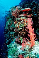 Coral Reef, Red Sea, Sudan
