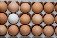 High angle view of an egg carton