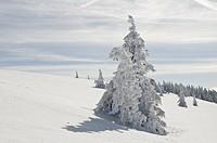 Winter200933