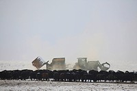 winter feeding cattle in tractor machinery hay