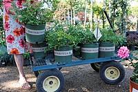 business woman shopping retail nursery gardening