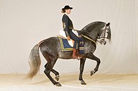 woman riding on Pure Spanish_bred horse