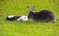 two different rabbits on meadow