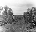 A GARDENER TENDING TO THE GREEN WALK AT LILFORD HALL.
