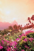Caribbean, St. Lucia, Pitons, view from La Haut Plantation bougainvillea in foreground