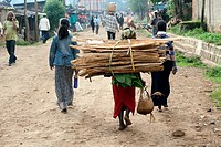 Woman carrying fire wood on her back, seen from backside, Mizan Tefari, Ethiopia, East Africa.