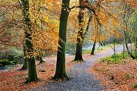 Path by the River Wharfe Strid Wood Wharfedale Yorkshire England