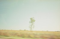 blurred lone tree