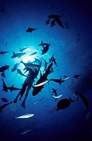 Diving in Red Sea, Hurghada, Egypt