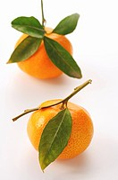 Mandarin oranges with leaves