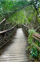 Boardwals trail through everglades national park