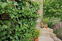 VITIS VINIFERA GRAPE VINE IN A BACKYARD GARDEN. DESIGN: JUTTA WAHREN