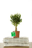 Potted plant on stack of newspapers, Germany