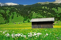 Hay barn on a mountain meadow near the village of Laehn, Tiroler Zugspitz Arena, Tyrol, Austria