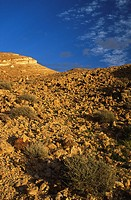 TUNISIA, Chebika Region, Tamerza  Soft evening light illuminates the mountainous landscape found near to the town