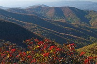 Rowanberries against a mountain scenery, USA.