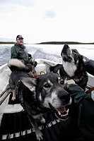Hunters and dogs in a boat, Sweden.