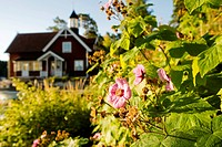 Flowers in front of an old house, Sweden.