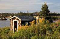 old fish shack and wildflower field near Sambro, Halifax, Nova Scotia, Canada, North America