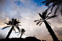 Photograph of the twilight skies over the palm trees in the Judean Desert