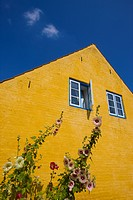 Hollyhock and traditional yellow house