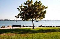 Park at the waterfront, Sarasota Bayfront Park, Sarasota Bay, Sarasota, Sarasota County, Florida, USA