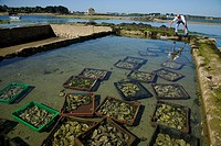 Oyster farm in Ria d´Etel. Morbihan Coast. Brittany. France