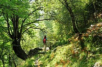 Woman hiking through mixed forest, Ticino Alps, Ticino, Switzerland