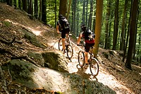 Two mountain bikers passing forest trail, Palatine Forest, Rhineland_Palentine, Germany