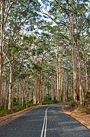 Southern Forest, Western Australia